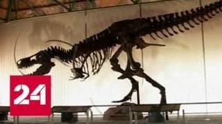 """Ученые """"скрестили"""" крокодила и выпь, чтобы услышать тираннозавра - Россия 24"""