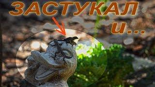 Прикольно - Ящерицы как Люди :-))  4К