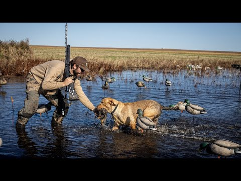 I Went Duck Hunting In North Dakota And My Dog Retrieved This.. (HIS FIRST TIME!!)