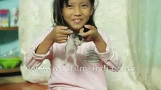 Cute Bhutanese girl plays with cute new born kittens