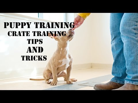 Puppy Training-Dog Weekend Crate Training Tips And Tricks