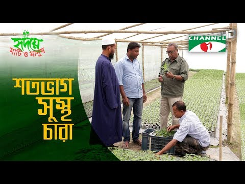 Bunch of entrepreneurs spreading healthy plants | শতভাগ সুস্থ চারা | Shykh Seraj | Channel i | HD |