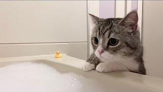 猫が初めて泡風呂を見たらびっくりしすぎてこうなりましたw