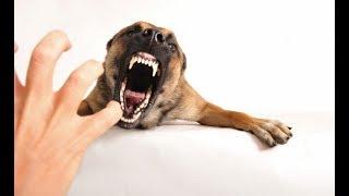 Агрессия собаки | Как избежать агрессию собаки в семье