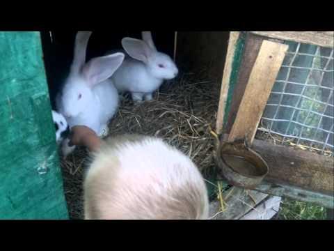 Как пищит заяц