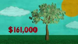 What is the value of a single tree? So Right So Smart