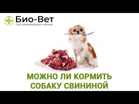 Собака и Свинина ��// Можно ли Кормить Собаку Свининой // ВЕТКЛИНИКИ БИО-ВЕТ
