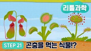 [리틀과학] STEP 21. ★곤충을 먹는 식물!?★ …