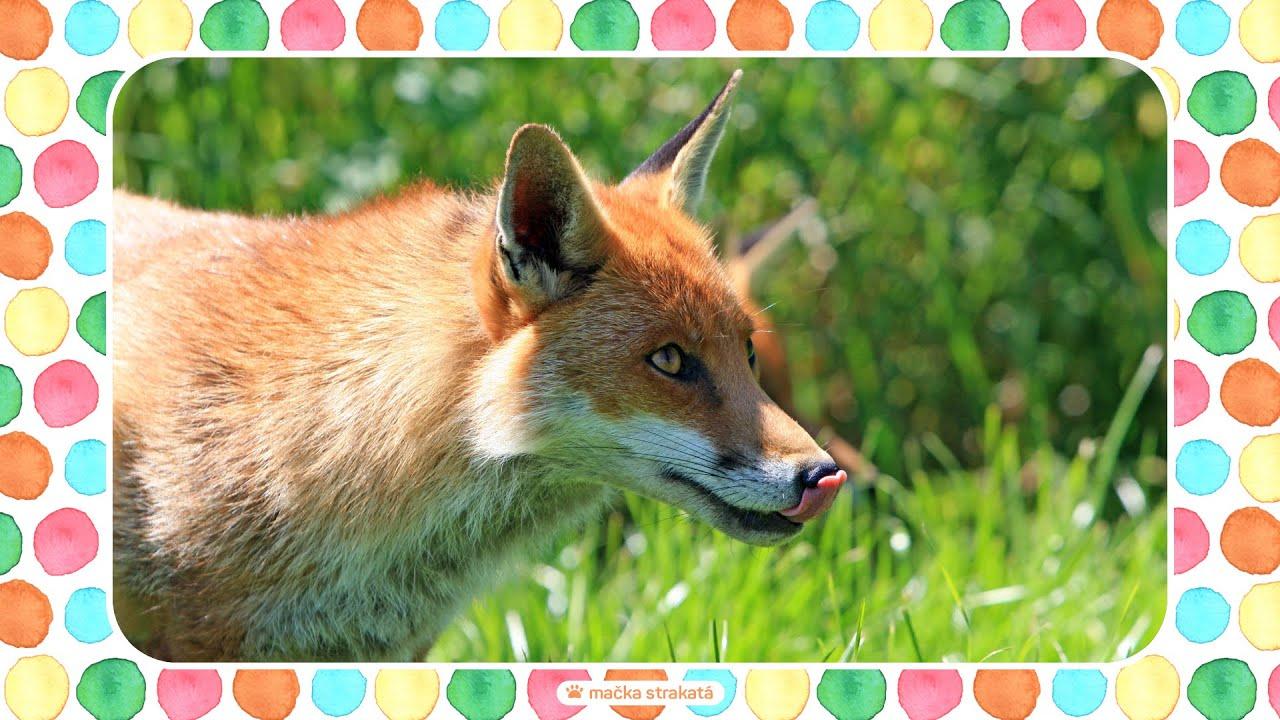 Zvieratka A Zvuky Zvierat Z Lesa Lesne Zvieratka A Zvieracie Zvuky