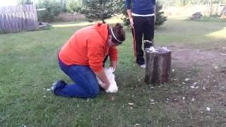 Whud Up Cedar Bend? - Amanda Kills A Chicken.
