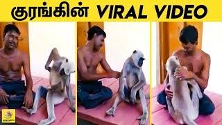 சொறிந்து விட சொல்லி செல்லமாக சேட்டை | Monkey Acts Like Human Funny Video