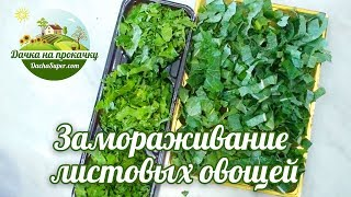 Заморозка листовых овощей