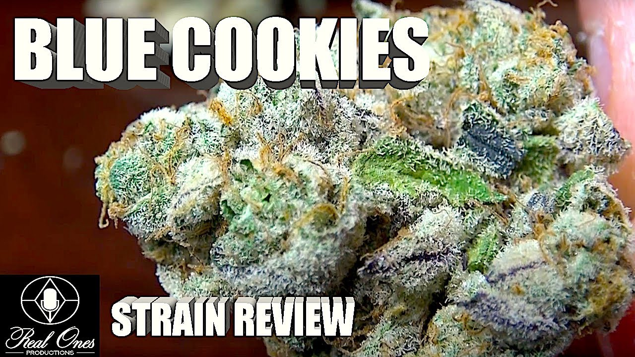 BLUE COOKIES STRAIN REVIEW