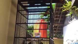 Burung Sikatan Jawa Gacor | Kipasan Part1