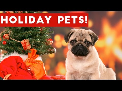 Hilarious Holiday Pet Moments Caught On Tape Weekly Compilation | Funny Pet Videos