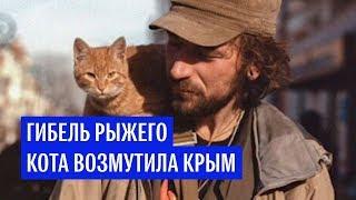Гибель рыжего кота возмутила Крым