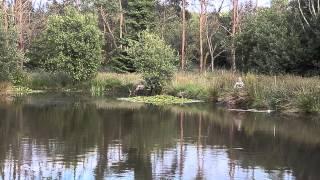 LITTLE YEO FISHERY, WITHERIDGE, DEVON