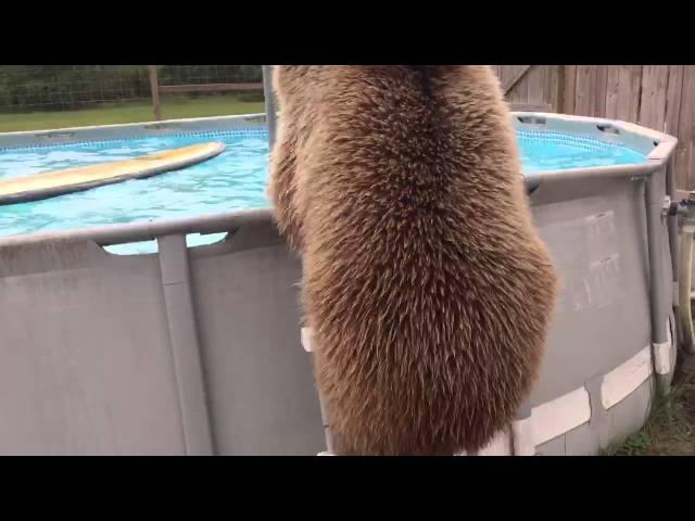 Bruiser Bear