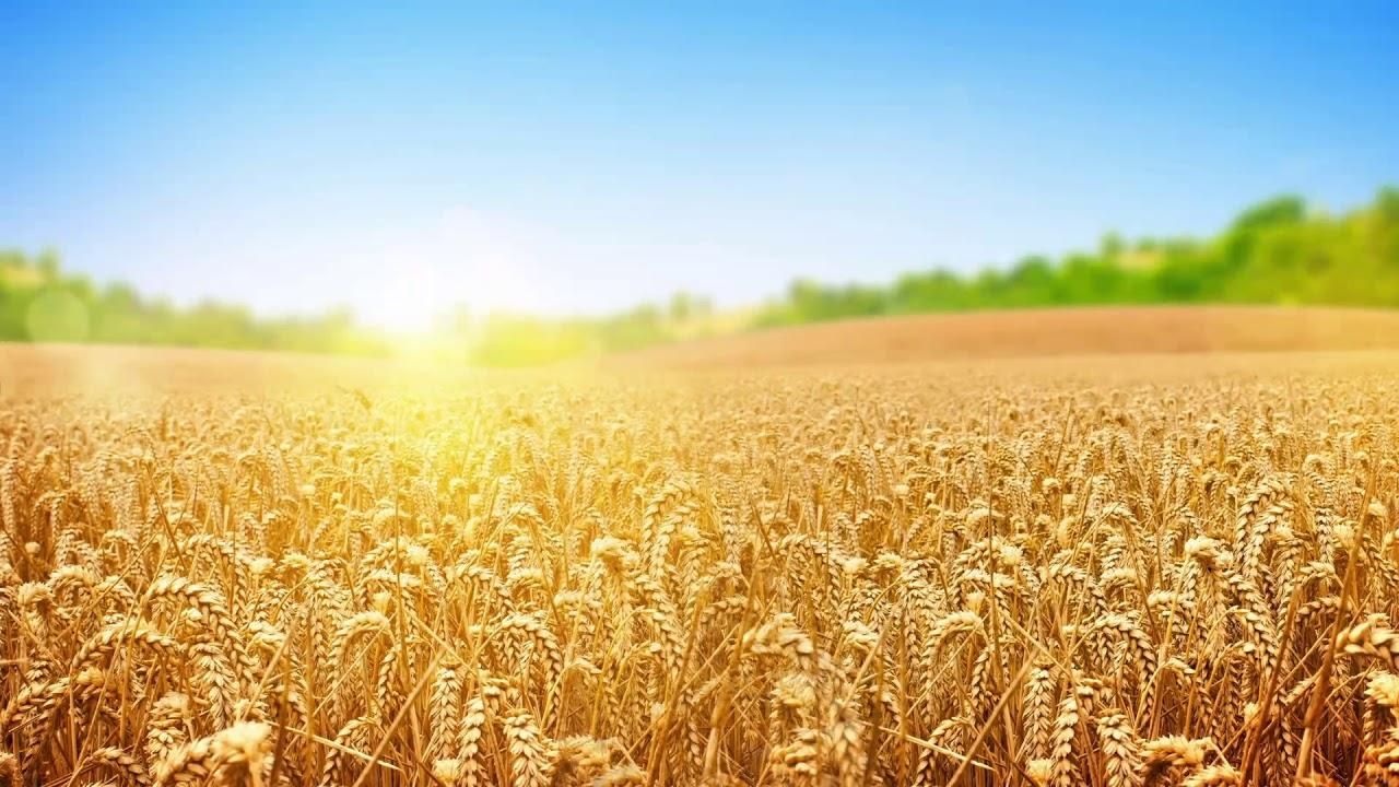 Фоны на открытки сельское хозяйство, днем