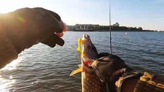 Лёгкий джиг Рыбалка на щуку с плотины Experience 802 MML в деле 2019г
