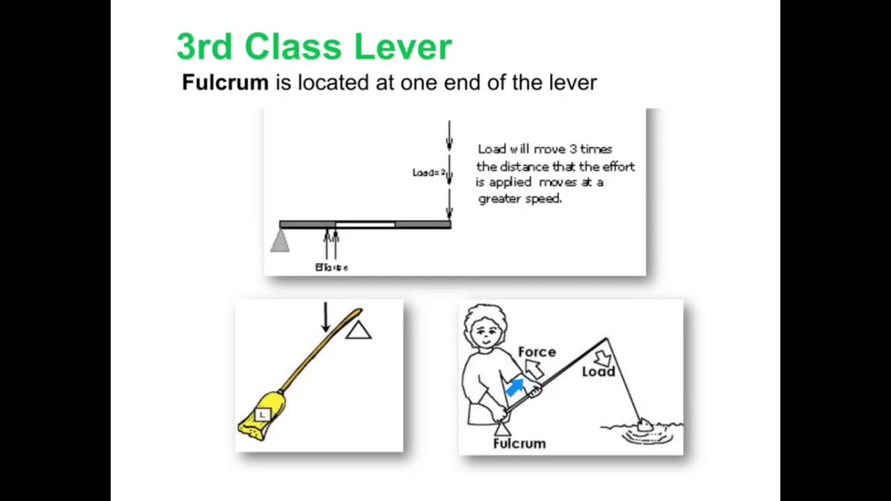 3rd Class Lever Part Youtube