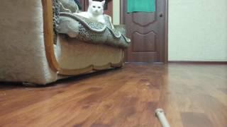 Не для слабонервных: Танк против кошки Tank vs cat
