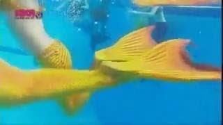 Хочу стать русалкой! Хочу хвост как у русалки! Какой хвост русалки лучше ГЕРМАНСКИЙ или АВСТАЛИЙСКИЙ(Классно стать русалкой и плавать под водой как русалки н2о!_ _ _ _ _ _ _ _ _ _ _ _ _ _ _ _ _ _ _ _ _ _ _ _ _ _ _ _ _ _ _ _ МЕНЯ МОЖНО..., 2014-02-27T10:56:14.000Z)