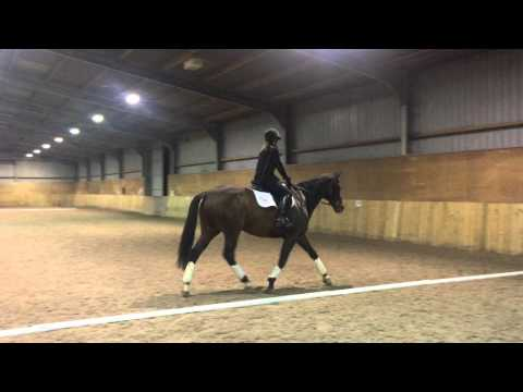 Intro C Dressage Test - higher quality