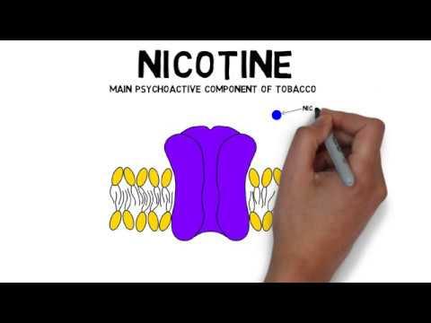 2-Minute Neuroscience: Nicotine