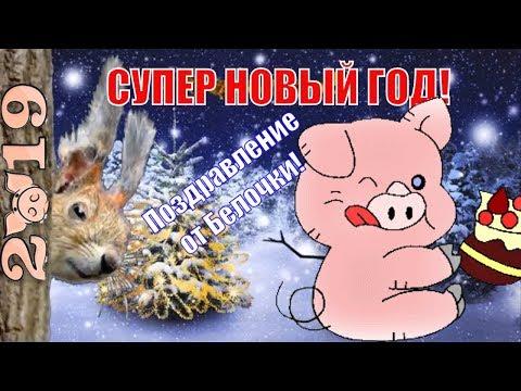 С НОВЫМ ГОДОМ ! Новый 2019 год Свиньи (Кабана) поздравления от белочки ! - Лучшие видео поздравления [в HD качестве]
