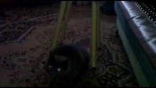 помогите моему коту.mp4