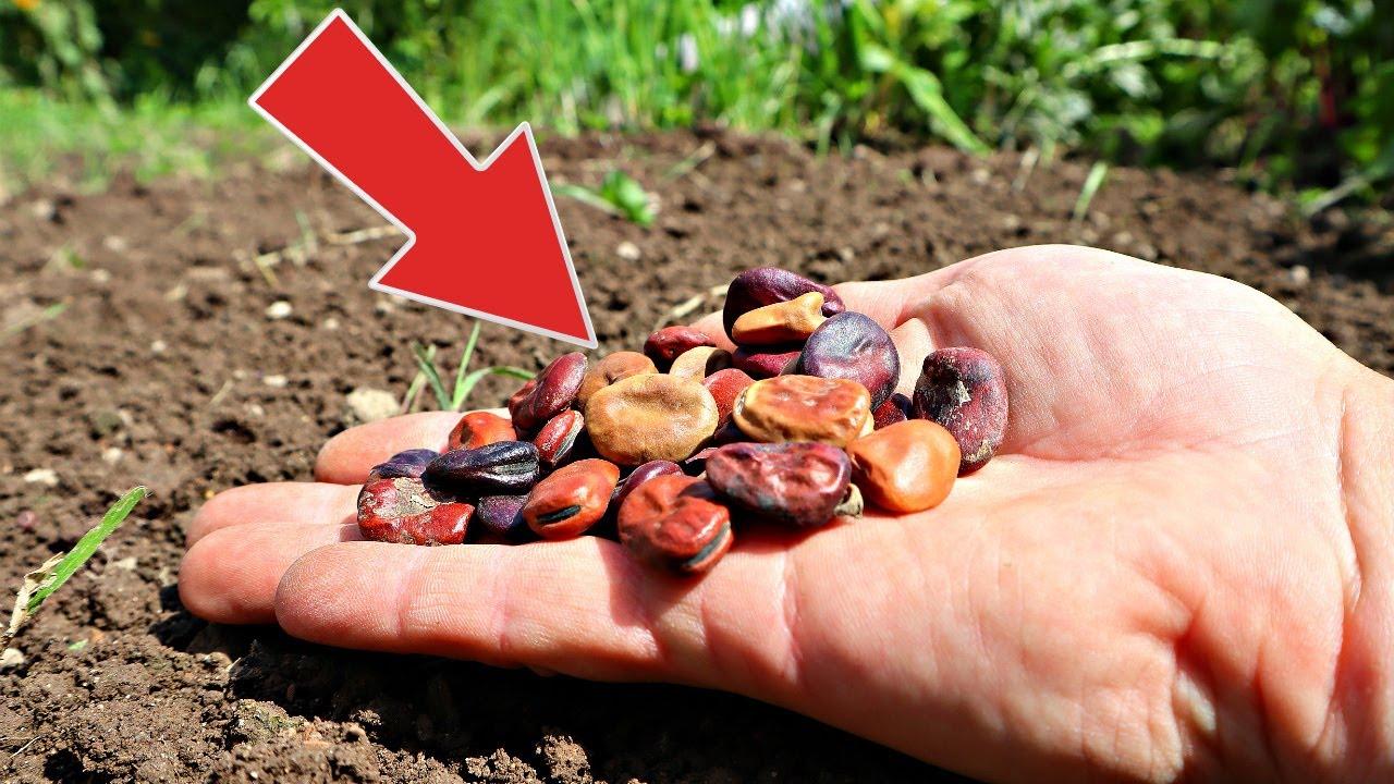 Сделайте это в августе на огороде и в саду пока не поздно! Что делать в саду и огороде в августе?
