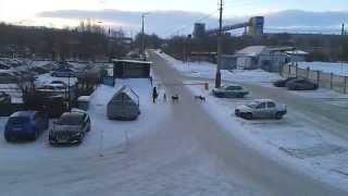 Магнитогорск. Агрессивные собаки нападают на людей возле Трест Магнитостроя