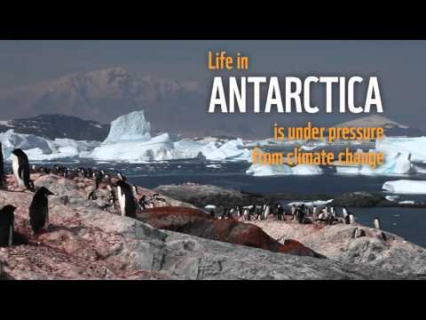WWF Antarctic Journey