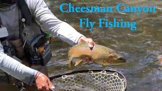 Cheesman Canyon Fly Fishing