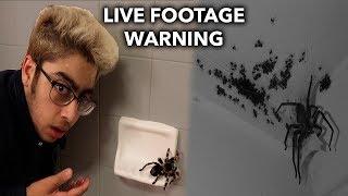 SPIDER INFESTATION IN HOME (LIVE FOOTAGE)