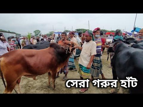 হজরতপুর পাড়াগ্রাম গরুর
