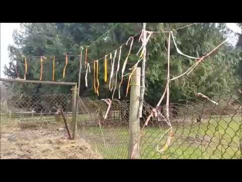 Deer Fence, Keep Deer Out Of The Garden