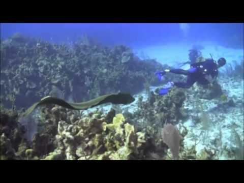 2014-02-14 Diving Cayman Brac