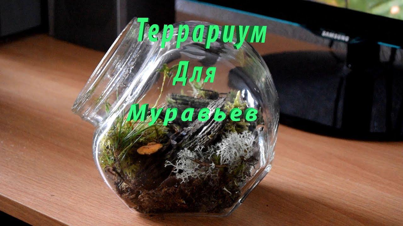Террариум для муравьёв