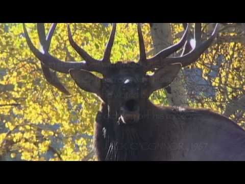 Answer The Call -- Rocky Mountain Elk Foundation