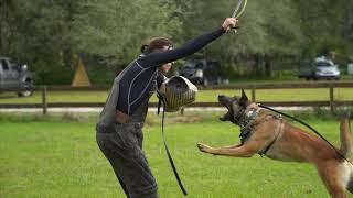THE MOST IMPORTANT COMMAND IN DOG TRAINING || Ivan Balabanov's 'Teaching The Out Command'