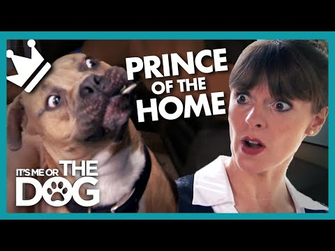 Rowdy Mastiff is the 'Prince' of Darkness! | It's Me or the Dog