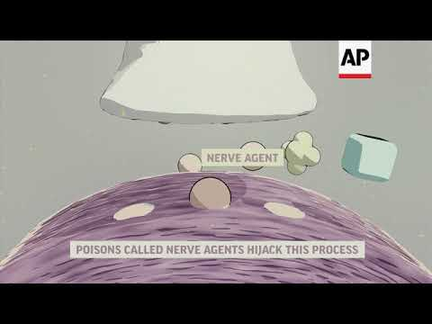 How nerve agents break down the body ++Animation with Text++