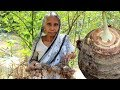 Village Food - Kochu Pora Traditional Indian Food Recipe by our Grandmother | Arum Root Burn