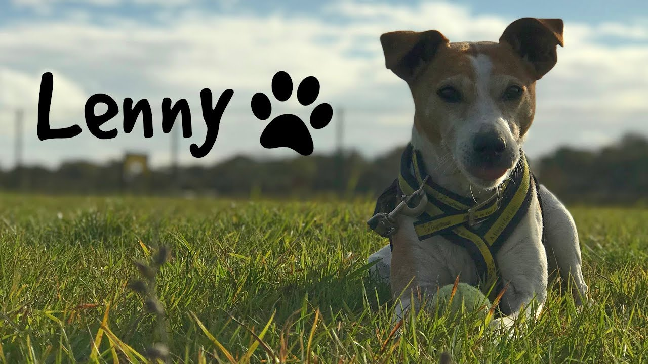 Dogs Trust Salisbury - Ladies man Lenny is looking for his special forever  home