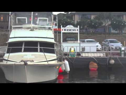 Maui: Rascal Fish Center
