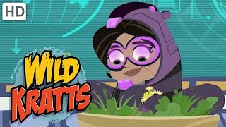 Wild Kratts - Aviva Transforms | Videos for Kids