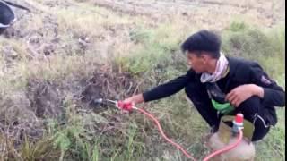 Petani Muda Indonesia   Basmi Tikus Dengan Komporan Gas 3 Kg