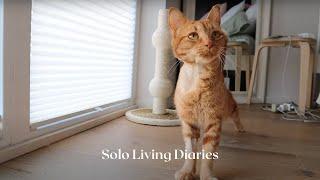 Solo Living Diaries   Adopting a Cat   Meet Clove